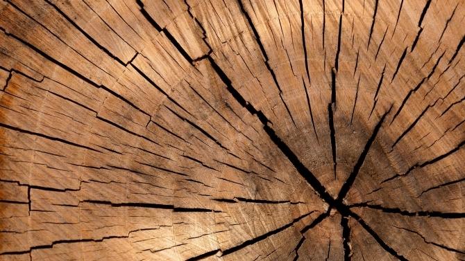 Derzeit ein knappes Gut: Holz (© Pixabay)